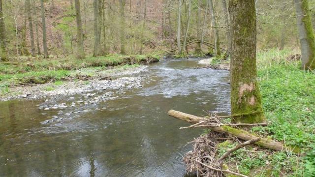 Die Bröl – ein attraktives Gewässer für Lachse
