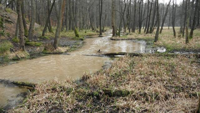 Sandgeprägtes Fließgewässer der Sander und sandigen Aufschüttungen – die Glenne