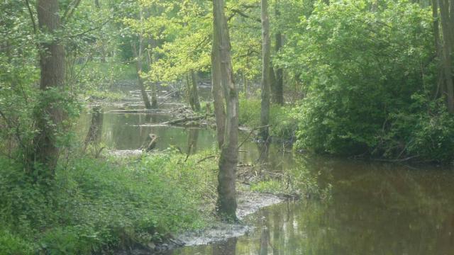 Die Schwalm im Bereich der Vennmühle – naturnahe Gewässerentwicklung