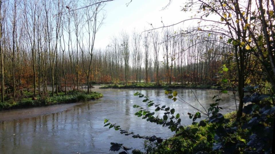 Die Erft nahe des Kentener Vogelwäldchens bei Bergheim