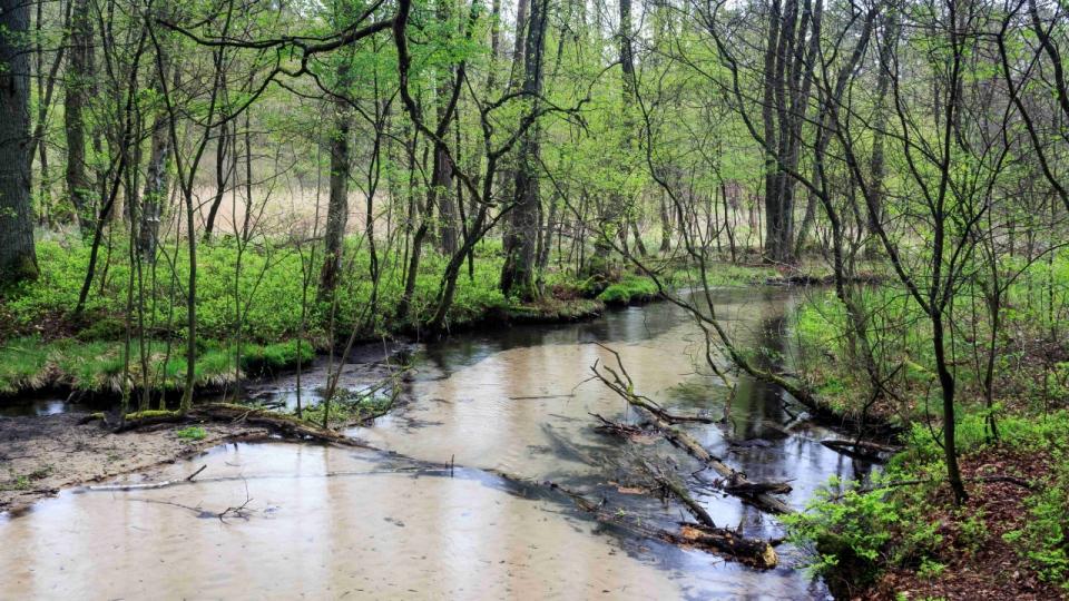 Der Furlbach – naturnahe Gewässer beleben die Landschaft