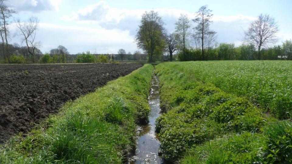 Der Rüstebach – ein Gewässer im landwirtschaftlich genutzten Raum