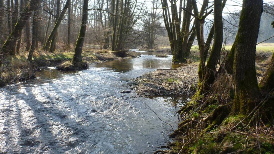Kleiner Talauebach im Grundgebirge – die Sieg