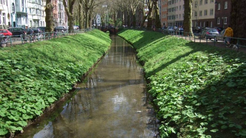 Die südliche Düssel – ein urbanes Gewässer