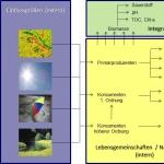 Schematische Darstellung von Ursache- und Wirkungszusammenhängen der Trophie in Tieflandfließgewässern