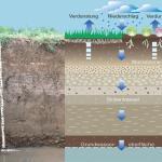 Übersicht über die Wasserbewegung im Boden.
