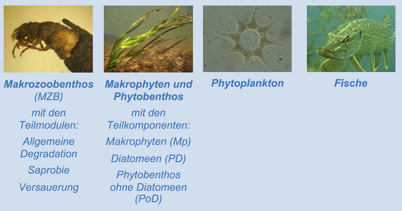 Biologische Qualitätskomponenten w800 h420