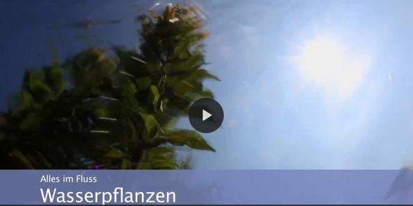 Lippe / Wasserpflanzen